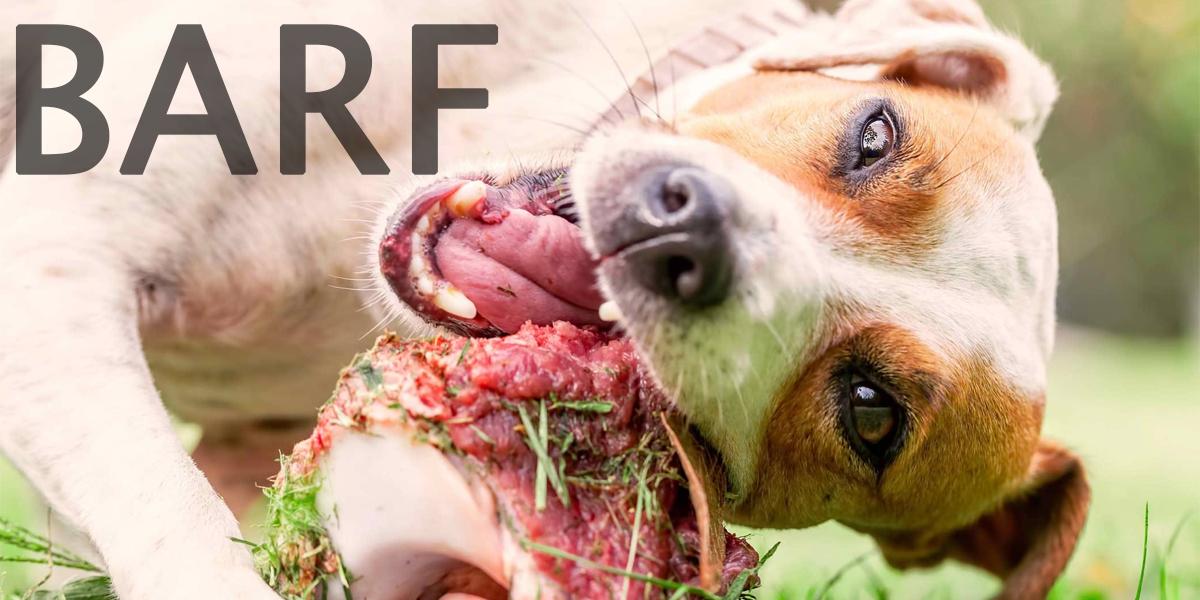 Jak správně krmit psa masem - B.A.R.F.