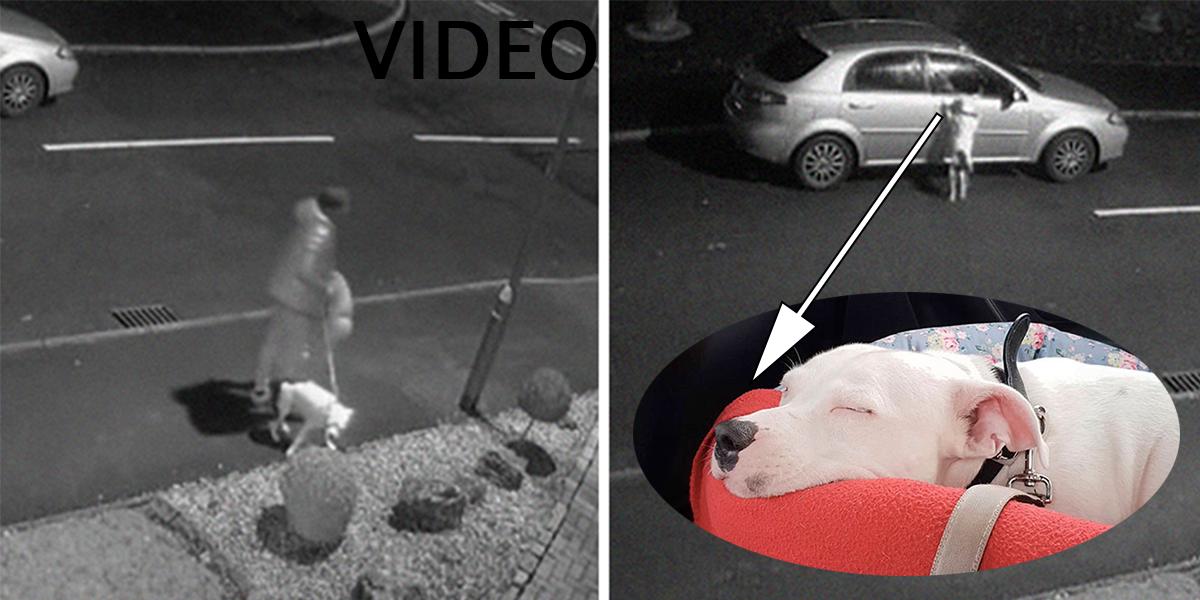Příběh psa, který se snažil dostihnout svého nezodpovědného majitele má překvapivé novinky.
