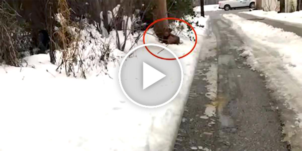 Našli třesoucího psa u stromu, sám si je přivolal...