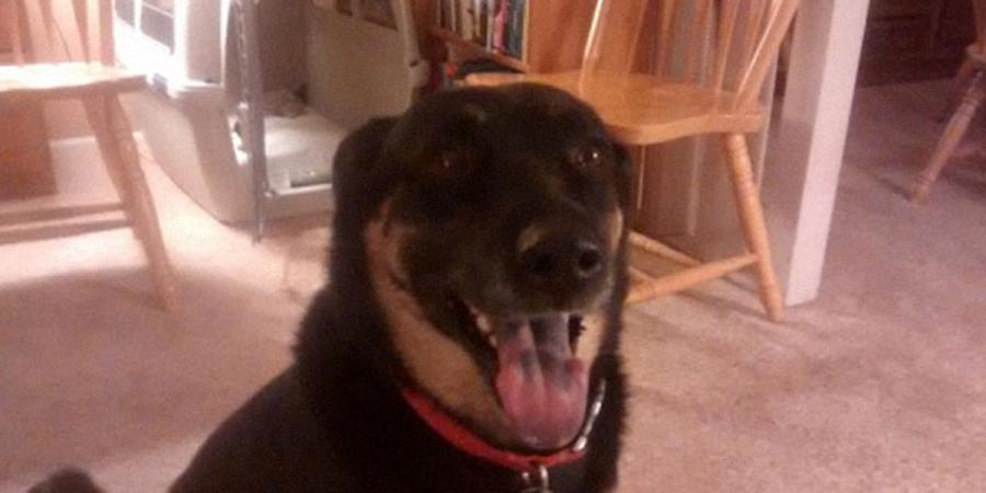 Dostali jsme psa vycvičeného ve věznici, je opravdu zvláštní