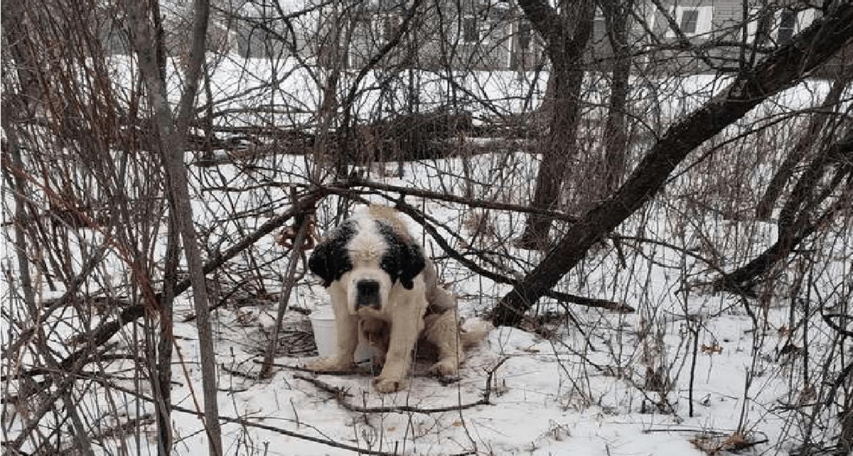 Tenhle psí senior zvládl sám v mrazech 2 týdny, bez pomoci
