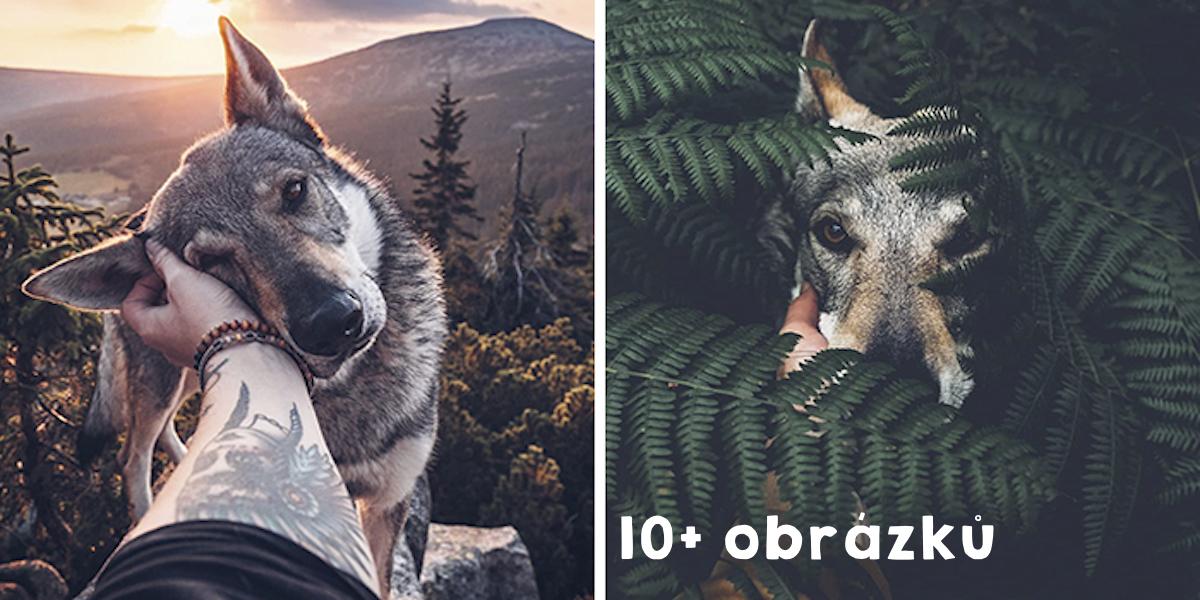 """Také Vás nudí obrázky typu """"ODEBÍREJ!""""? Tenhle majitel to zvládá 18x lépe: """"Fotím svého psa všude tam, kam dojdu."""""""