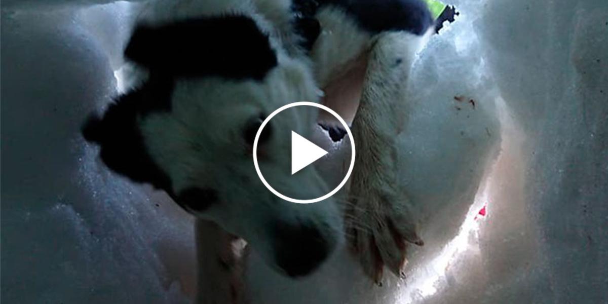 Muž zasypaný sněhem natočil psa, který ho zachraňuje