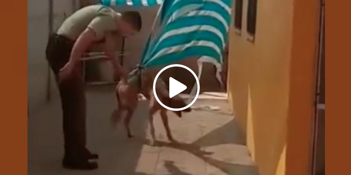 Uvězněný pes dal svému zachránci to nejkrásnější poděkování