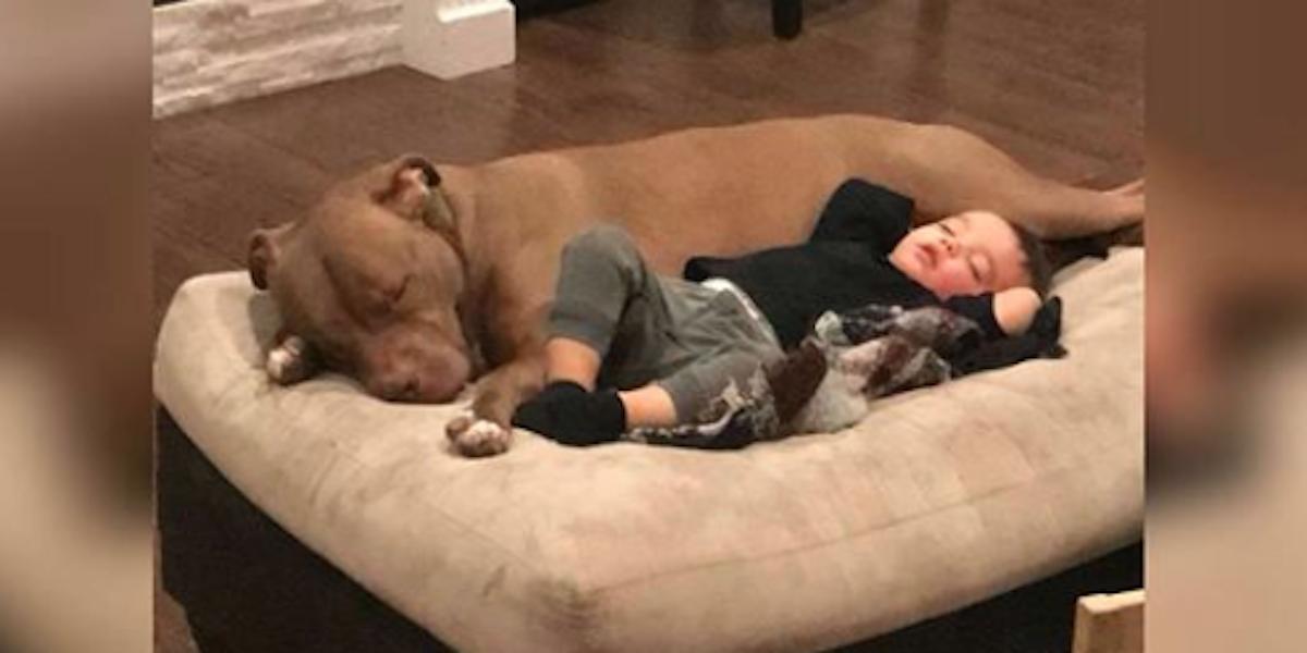 Tenhle chlapec dostal chřipku a nechce se nechat od nikoho utišit - kromě adoptovaného psa