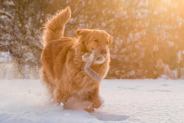 Jak to máme s nejrůznějšími potřebami pro psy