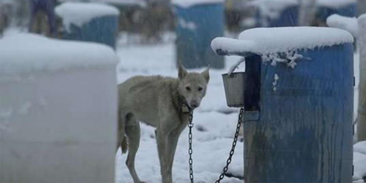 NÁZOR: Coca-Cola udělala pro sáňové psy něco úžasného