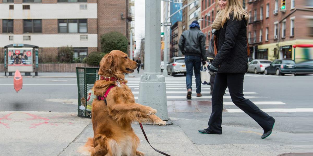 Seznamte se s Lubym, zlatým retrívrem, který stojí na rohu a nabízí objetí zdarma