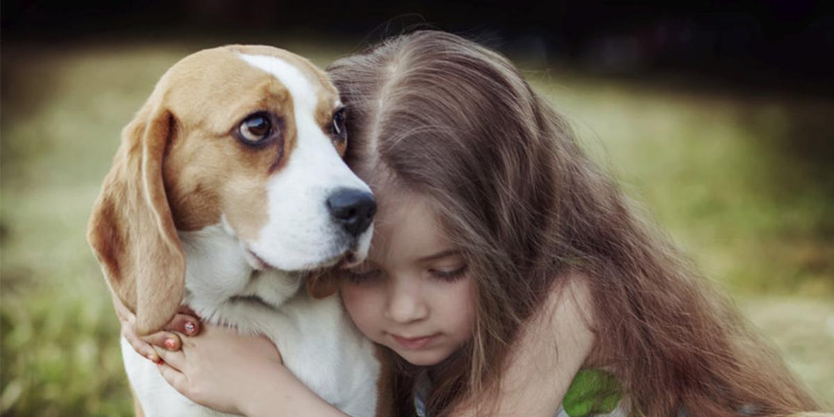 Jak si pes zvolí svého oblíbence číslo jedna?