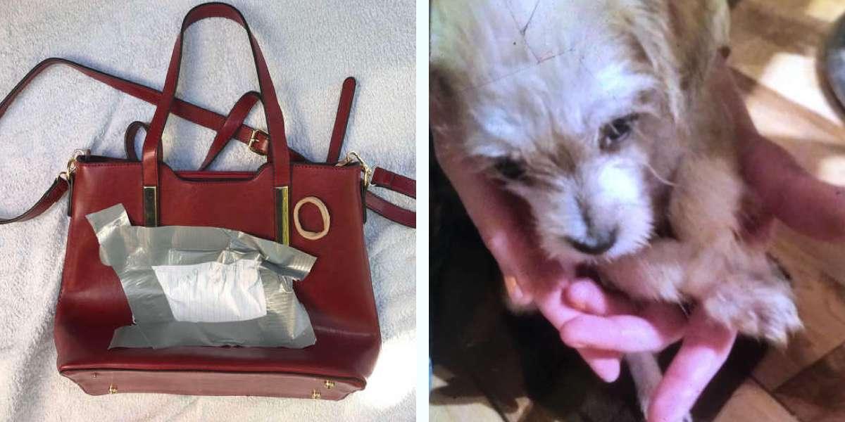 Našla v obchodě štěně v kabelce, tlapky mělo svázané k sobě, teď má konečně domov ♥
