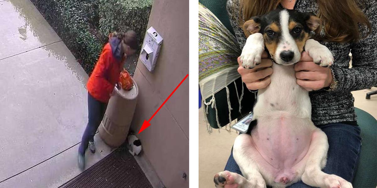 Vystrašené štěně čekalo na pomoc celou noc za odpadkovým košem, záchrana dorazila brzy ráno