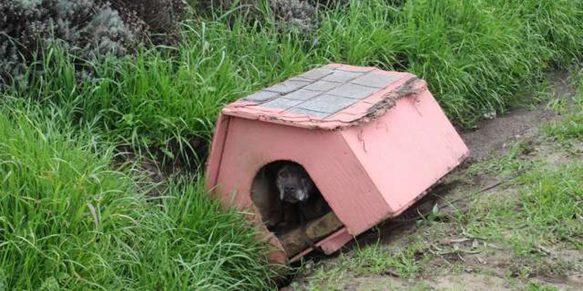 Odhozená fenka u silnice trpělivě čekala na pomoc ve své boudě