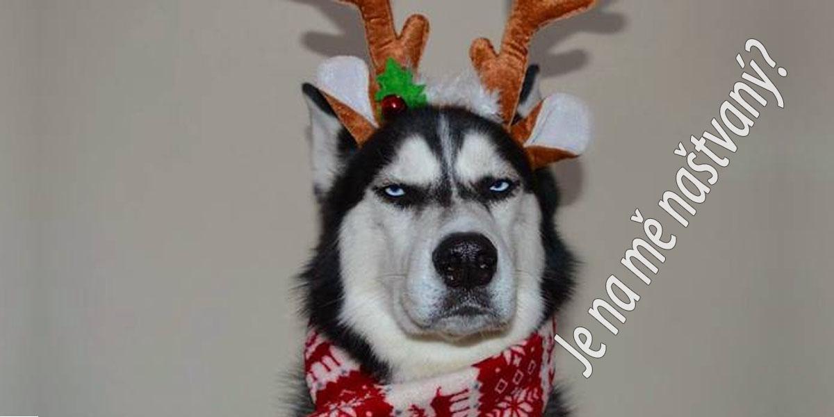 7 příznaků: Jak poznat, že je na mě pes naštvaný?