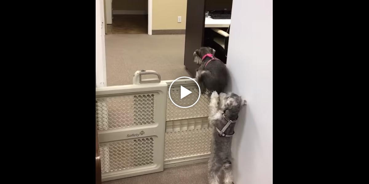 Pes uviděl ségru, jak se snaží porušit pravidla, a tak jí pomohl