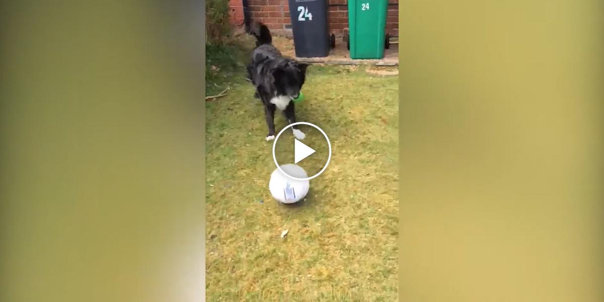 Pes nepustil pošťáky do doby, než si s ním zahrál fotbal