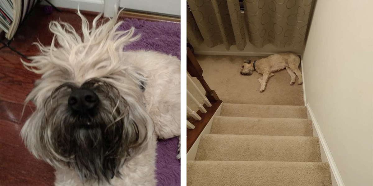 Pes, který usíná na těch vůbec nejhorších místech...