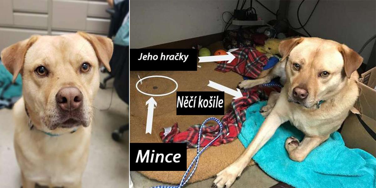 Pes z útulku krade vše, co jen může, ale má pro to ten nejsladší důvod