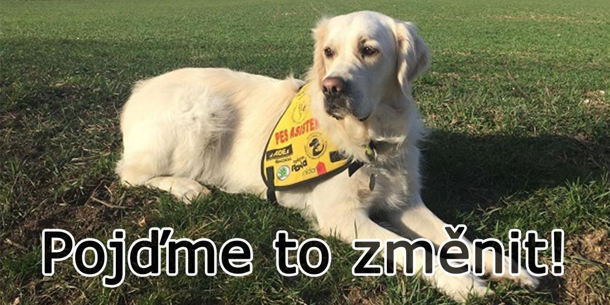 Asistenční psi nemají právo vstoupit do škol. Pojďme to změnit!