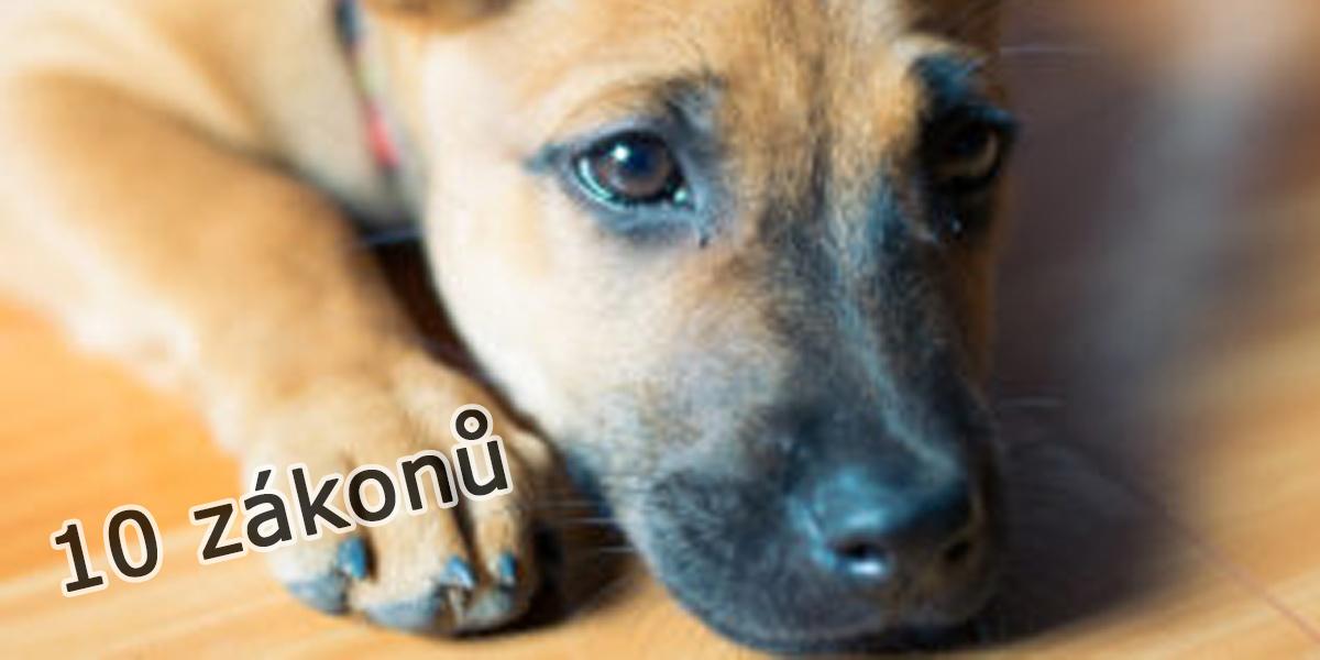 10 zákonů na ochranu psů a zvířat, které nám vrátily důvěru v lidskost