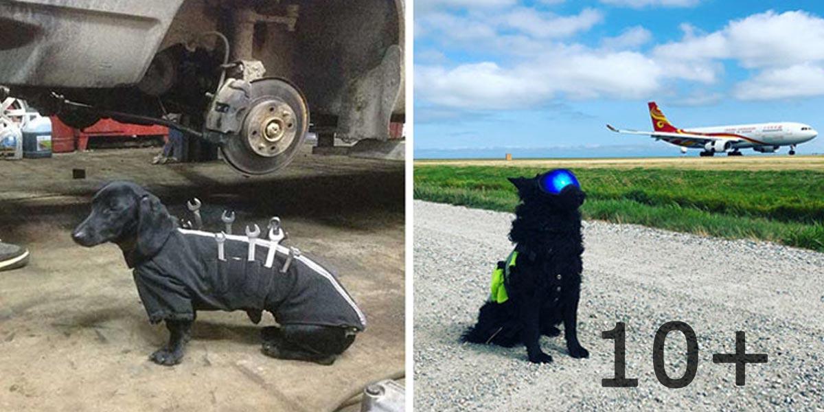 10+ psů, kteří mají opravdovou práci