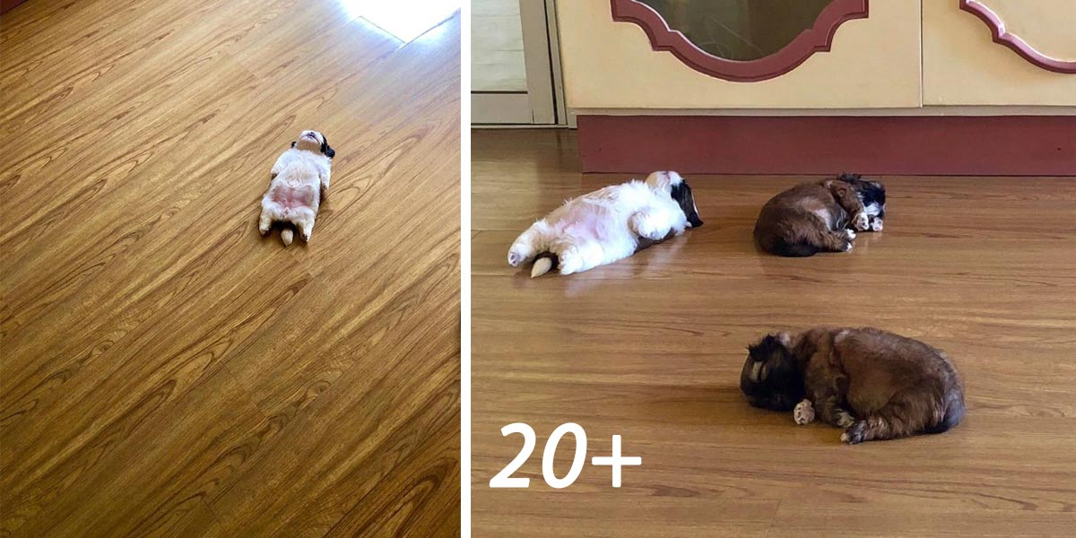 """Tohle štěně spí jako """"uspané."""" A je to podivně roztomilé (20+ obrázků)"""