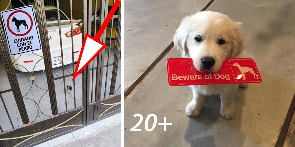 POZOR PES! 20+ psů, kteří pozemek (ne)ochrání