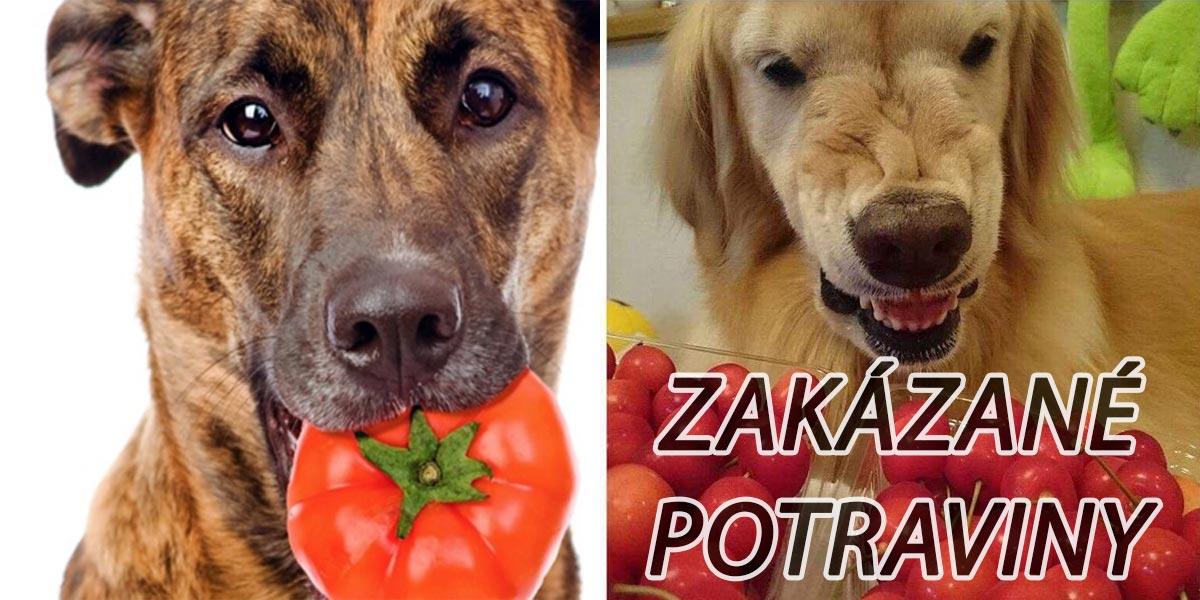 9 překvapivých potravin, které jsou pro psy nebezpečné