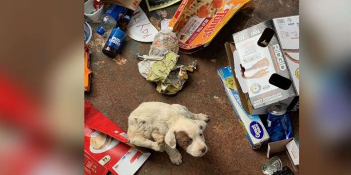 Otevřeli popelnici a uvnitř našli malinké štěně, nyní je už téměř plně zdravé