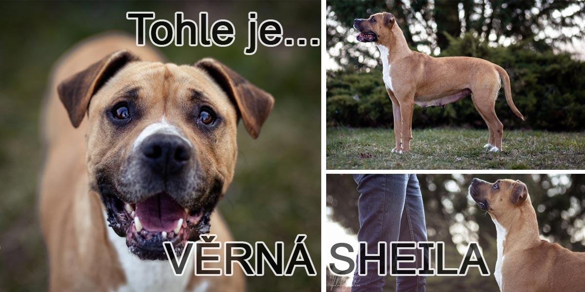 Bázlivá Sheila skončila se svým štěnětem na silnici, nyní hledá nového páníčka