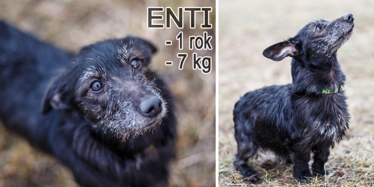 Pes Enti z domu hrůzy v Ivančicích stále čeká na nového majitele