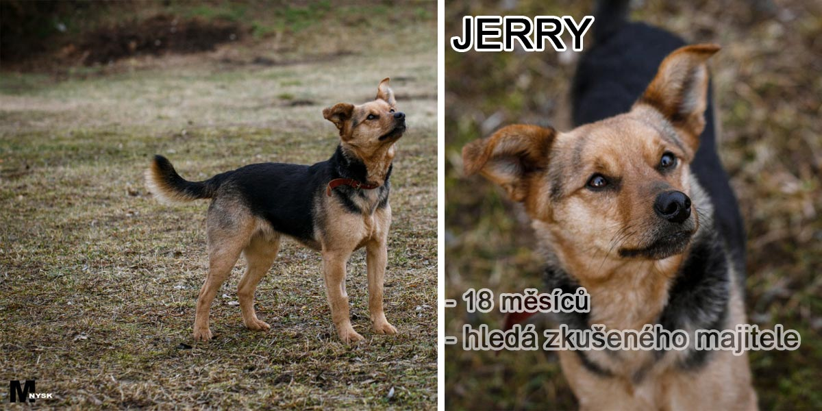 JERRY: Agresivní pes nebo nevinná oběť agresivních lidí?