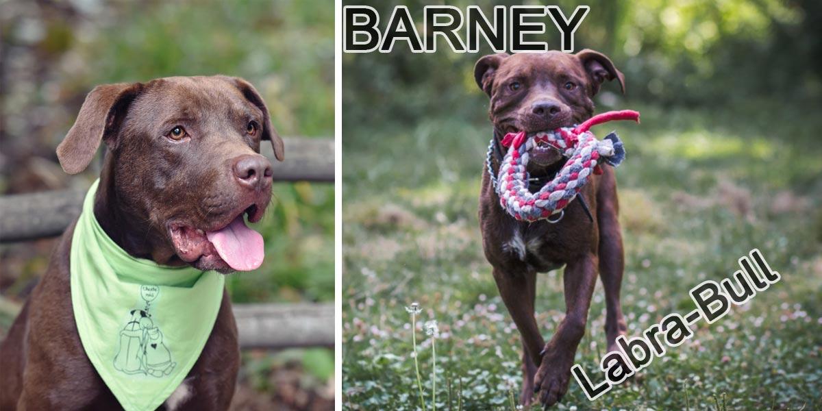 Energický Barney hledá nové majitele