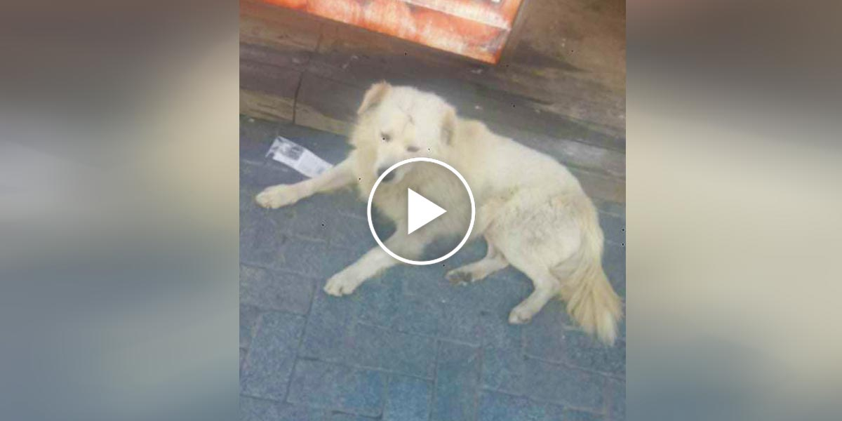 Ztracený pes nevěřil vlastním očím, že ho jeho rodina konečně našla