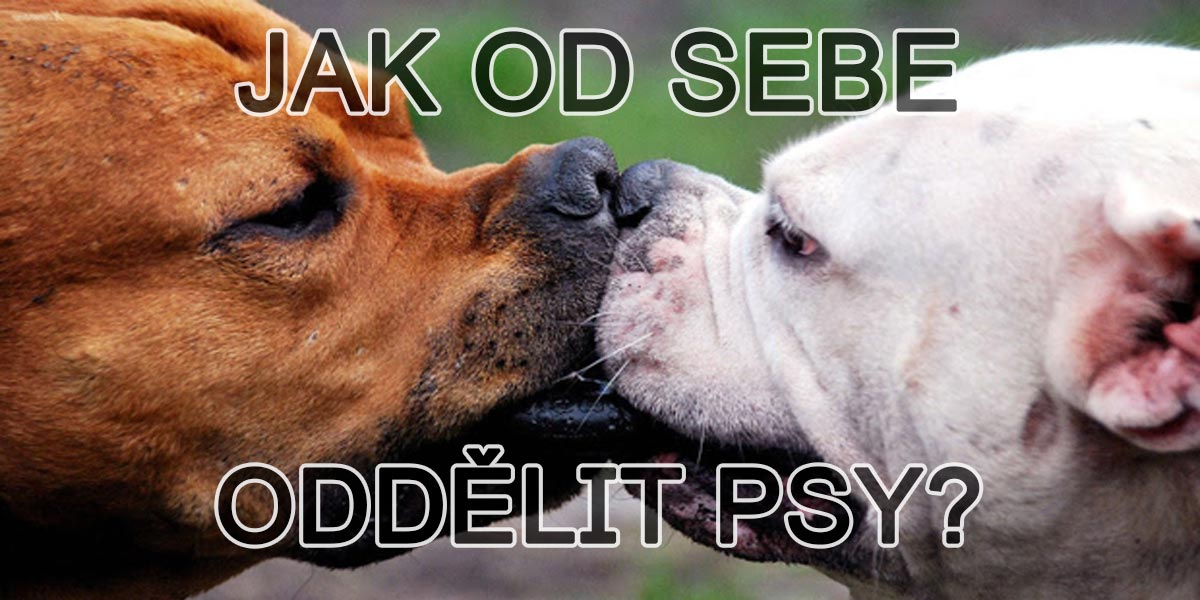 Jak od sebe oddělit psy, kteří se spolu perou?