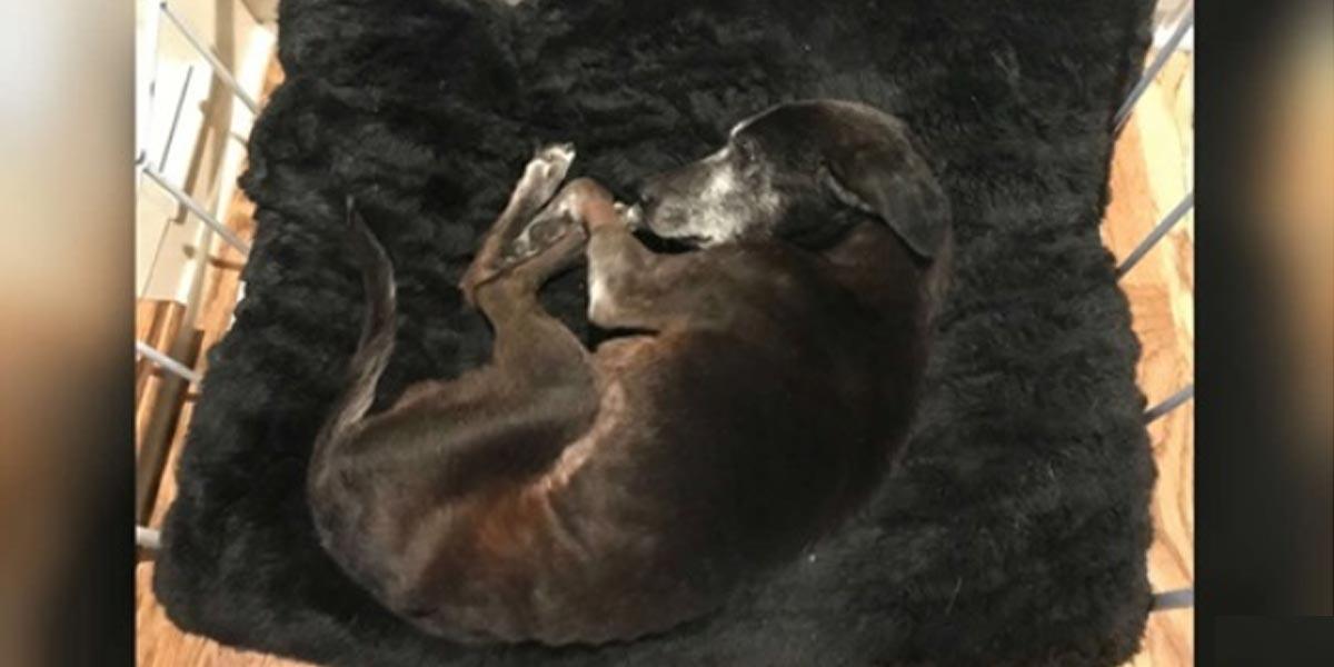 Nemohoucí pes začal vrtět ocasem, jakmile uslyšel lidský hlas
