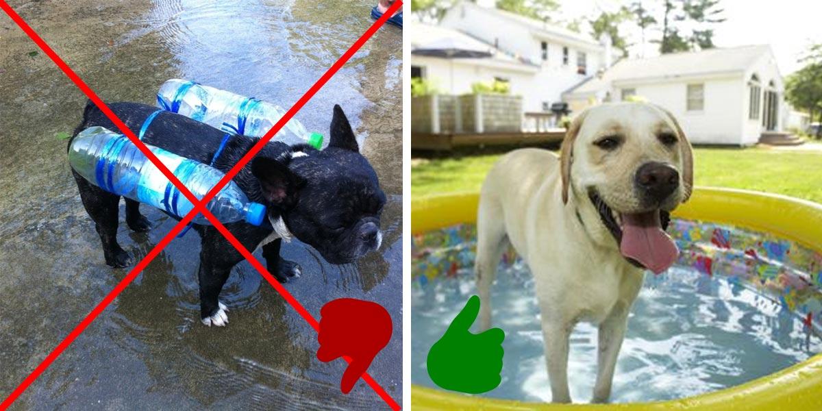 Jak správně v létě ochladit psa?