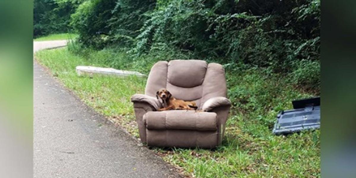 Štěně na křesle a s televizí čekalo u silnice, až se jeho majitel vrátí zpět