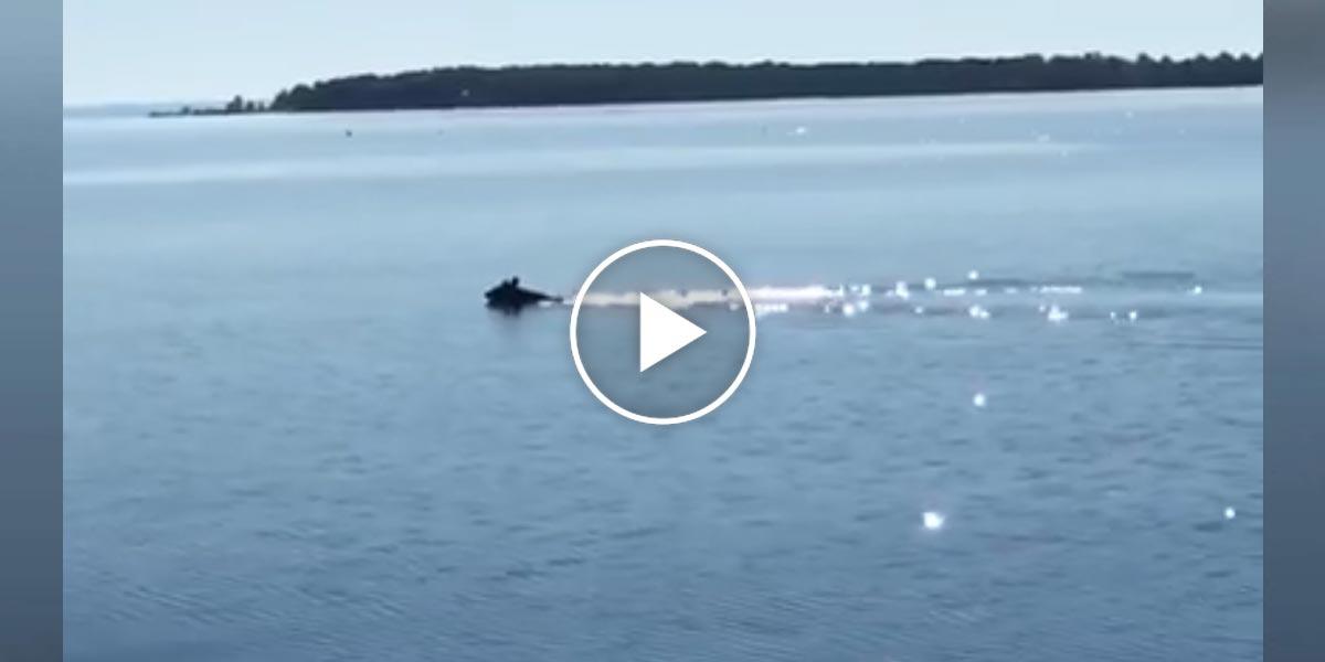 Žena musela zklidnit svého psa, aby nezačal plavat s medvědem