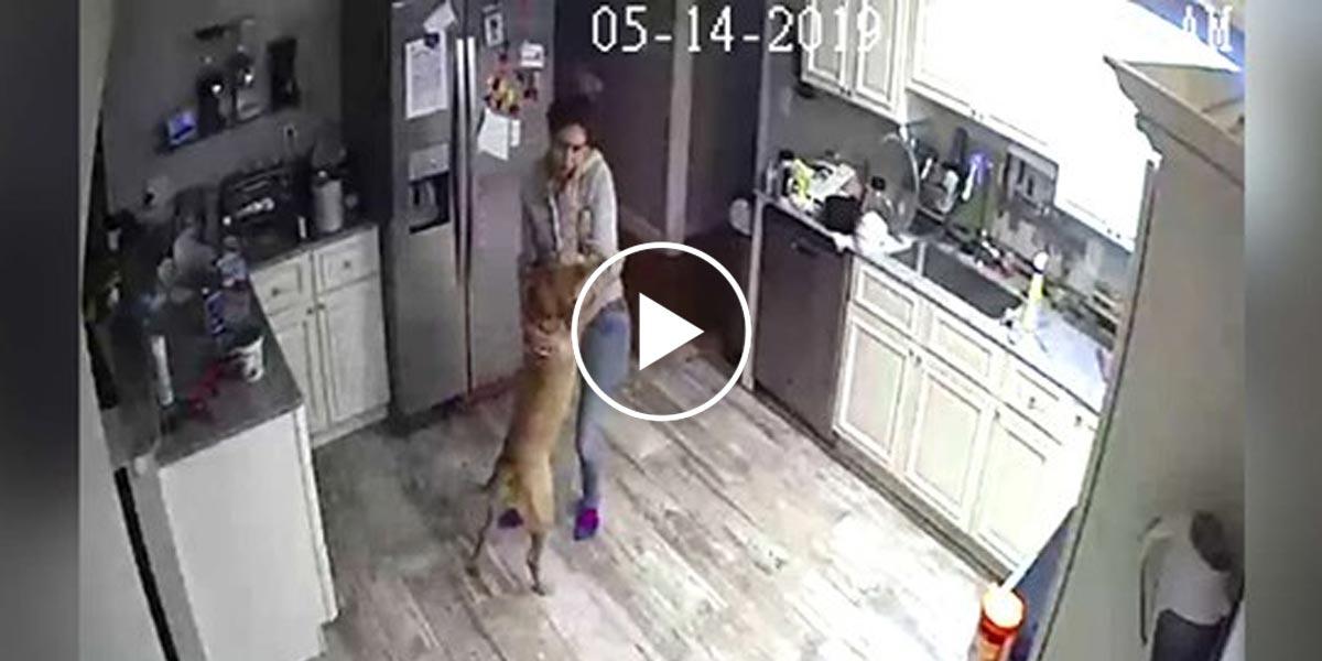 Skrytou kamerou zjistil, co jeho manželka a pes dělají, když není doma