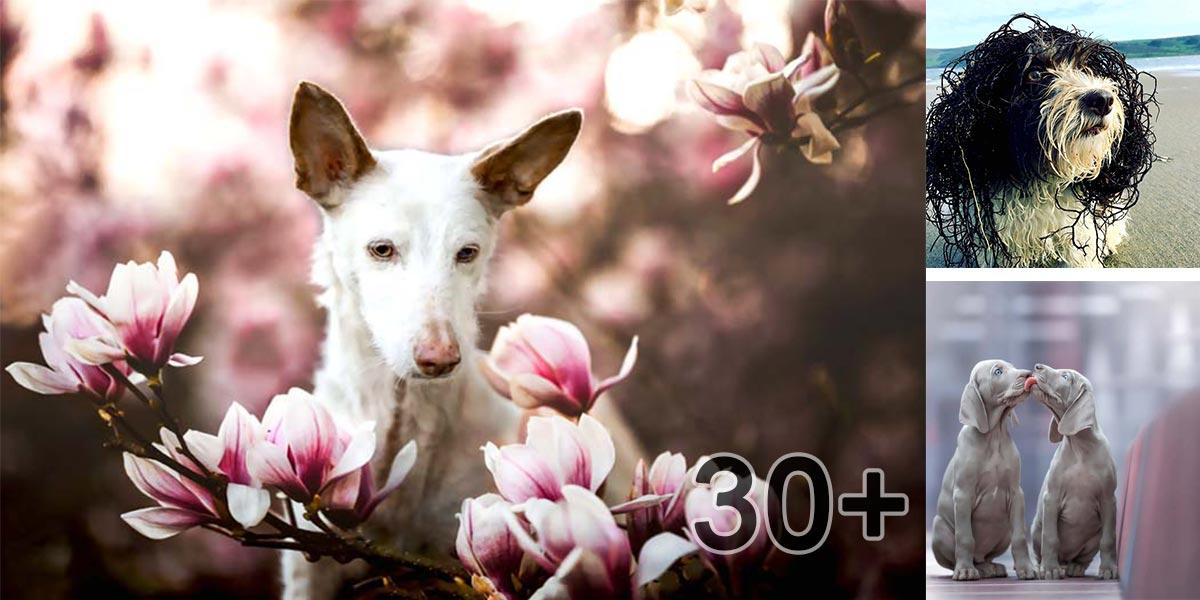 Už známe všech 10 psích vítězů v celosvětové fotografické soutěži roku 2019! (30+ obrázků)