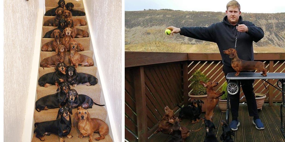 Tenhle mladík vytvořil unikátní fotografii svých 16 jezevčíků