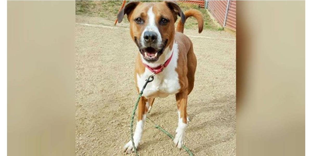 Roztomilý pes čekal v útulku na novou rodinu 3 roky