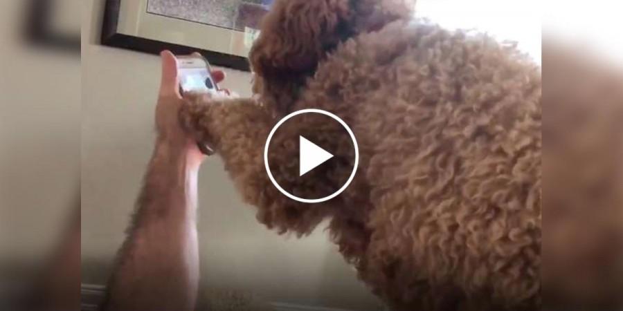 Asistenční pes měl úžasnou reakci na hovor od majitelky