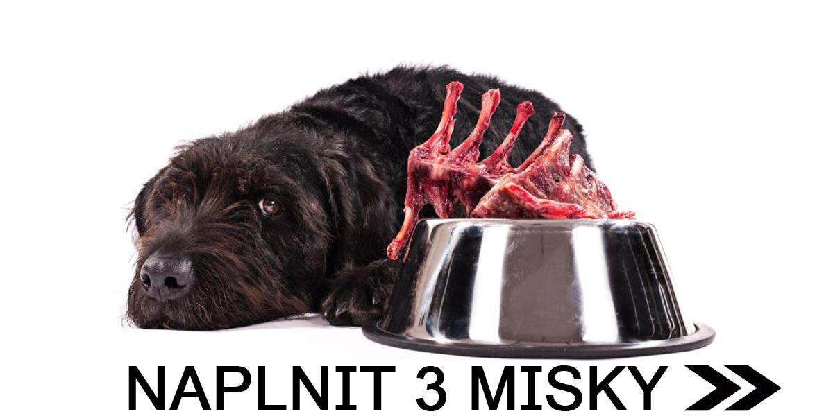 Naplňte 3 misky psům v útulcích jedním kliknutím