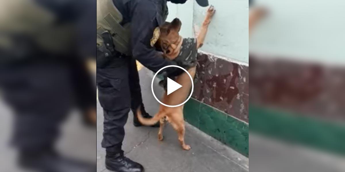 Pouličního psa adoptovala Policie, teď ho i zaměstnala