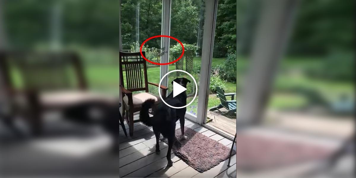 Pes našel uvězněného ptáka - a zachránil mu život