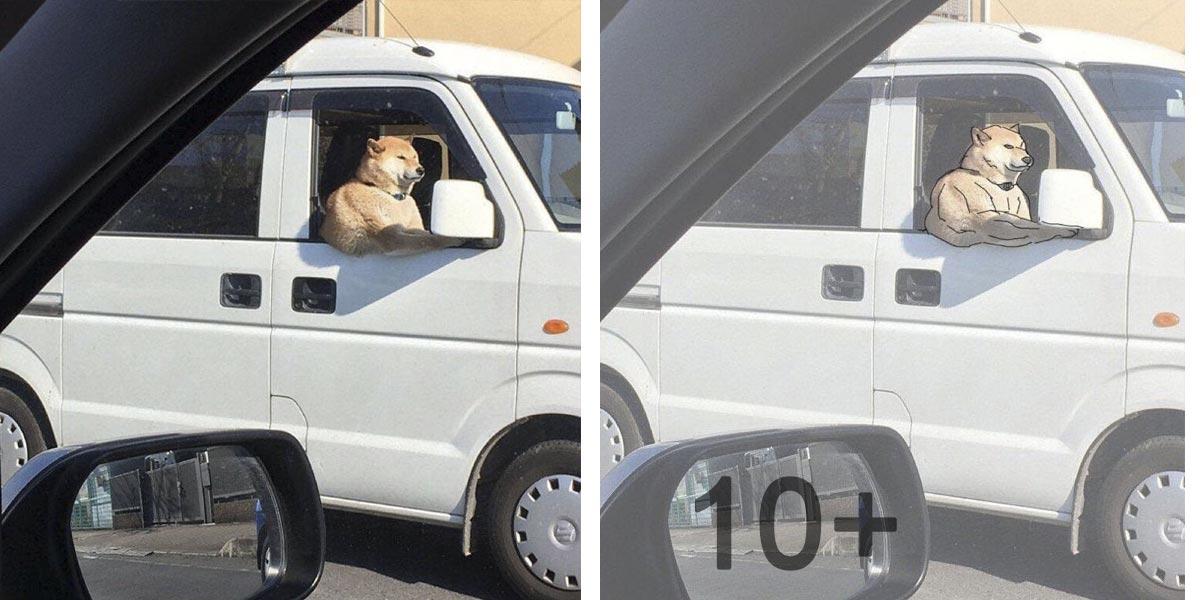 10+ nejlepších optických iluzí nejen se psy