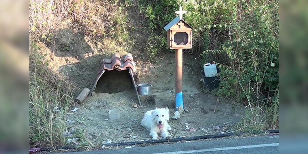 Věrný pes odmítá opustit místo nehody svého majitele už 18 měsíců, místní mu postavili obydlí