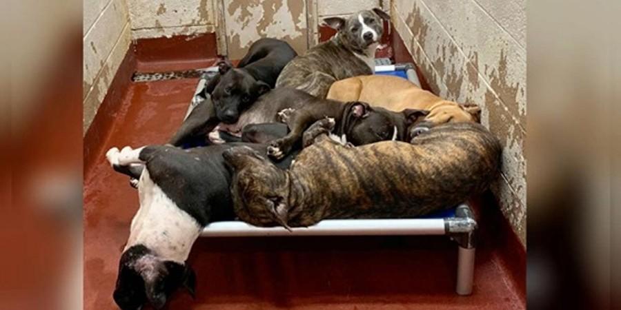 Útulky jsou přeplněné psy, kteří nemají dostatek prostoru