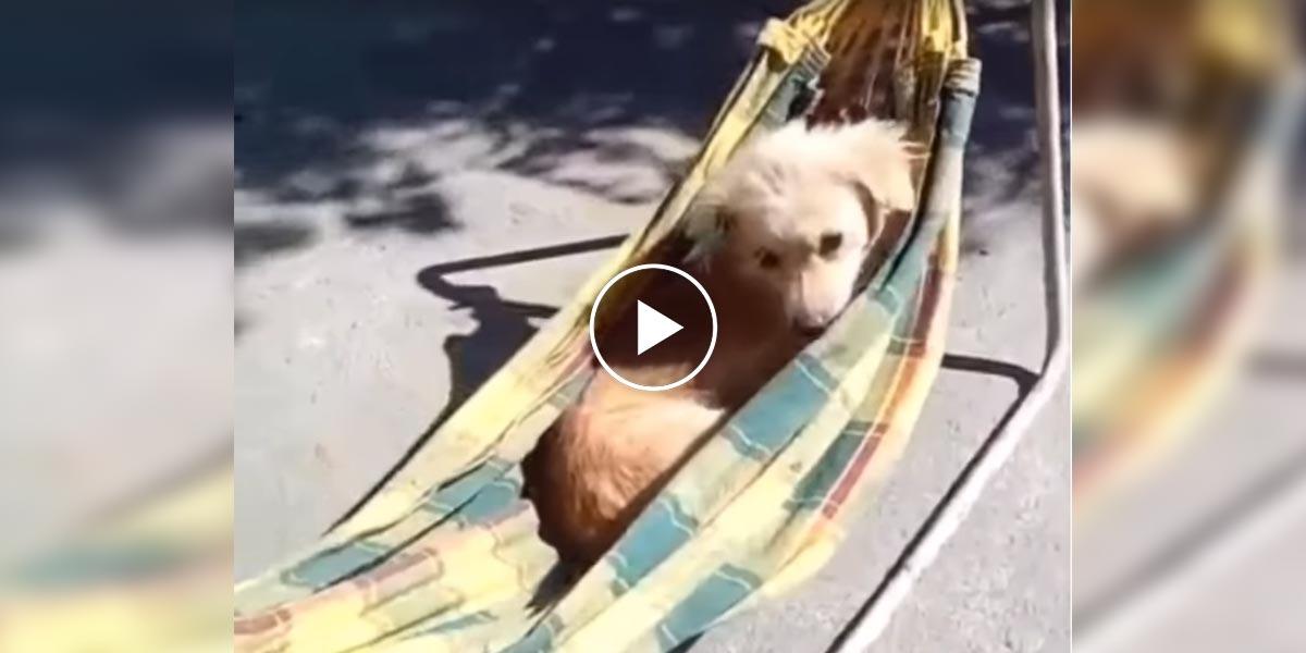 Úžasné video aneb když je pes v roli alfa samce
